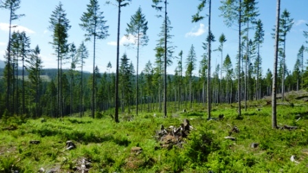 What is aggregated tree harvesting?